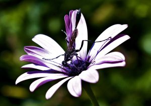 DAMSELFLY NO 4 BLESSED DEVOTIONAL 9-2015